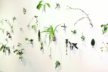 Sibel Horada, An Internal Garden, 2018, Installation, Cuttings, jars, clamps and water